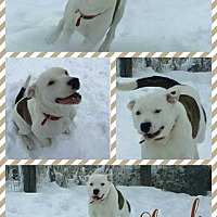 Adopt A Pet :: Stash - Idaho Falls, ID