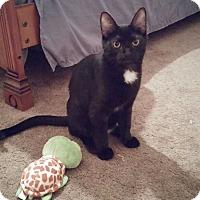 Adopt A Pet :: Izzy - Oak Lawn, IL