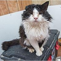 Adopt A Pet :: Sylvester - Corinne, UT