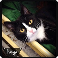 Adopt A Pet :: Kanga - Hartford City, IN
