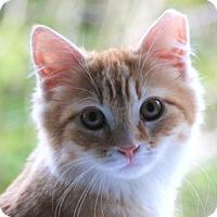 Adopt A Pet :: Quigley - Palo Alto, CA