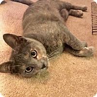 Adopt A Pet :: Roxy - Colmar, PA
