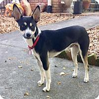 Adopt A Pet :: Alto (GA) - Atlanta, GA