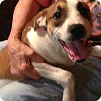 Adopt A Pet :: Cocoa - Allentown, PA