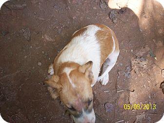 American Bulldog Mix Puppy for adoption in Wedowee, Alabama - Muffin
