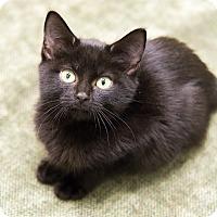 Adopt A Pet :: Winifred - Chicago, IL