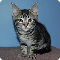 Adopt A Pet :: Loky - McDonough, GA