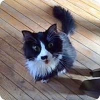 Adopt A Pet :: Booger - Byron Center, MI