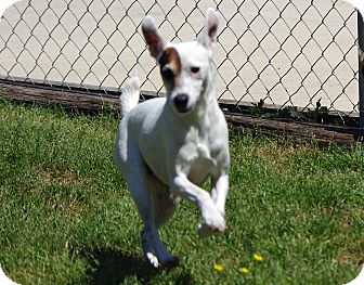 Terrier (Unknown Type, Small) Mix Dog for adoption in Spring City, Tennessee - Birdie