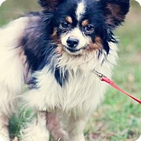 Adopt A Pet :: Trey - Gainesville, FL