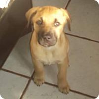 Adopt A Pet :: Tug and JW - Ogden, UT
