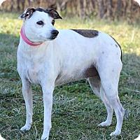 Adopt A Pet :: Maizy ADOPTION PENDING - Waldorf, MD