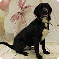 Adopt A Pet :: Devlin - Thomasville, NC