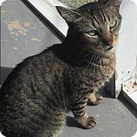 Adopt A Pet :: Maggie - Boca Raton, FL