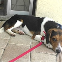 Adopt A Pet :: Trevor - Tampa, FL