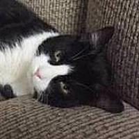 Adopt A Pet :: RUPERT-HANDSOME LOVER BOY - New York, NY