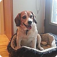 Adopt A Pet :: Barkley - Montreal, QC