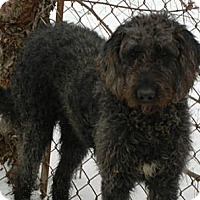 Adopt A Pet :: Kona ADOPTED!! - Antioch, IL