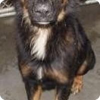 Adopt A Pet :: Beamer - Shirley, NY