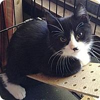 Adopt A Pet :: Stevie - Hood River, OR