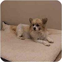 Adopt A Pet :: Frederick - Phoenix, AZ