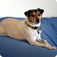 Adopt A Pet :: Ace - San Francisco, CA