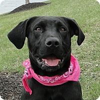 Adopt A Pet :: Clover - Lewisville, IN