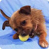 Adopt A Pet :: Zoee - San Francisco, CA