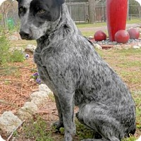 Adopt A Pet :: Pancho - Tyler, TX
