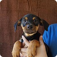Adopt A Pet :: Lilly - Oviedo, FL