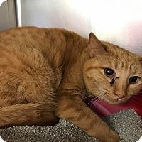 Adopt A Pet :: Simon - Maryville, MO