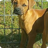 Adopt A Pet :: Roo - Salem, NH