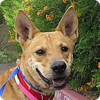 Adopt A Pet :: Kya - Scottsdale, AZ