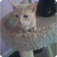 Adopt A Pet :: Leslie - Mobile, AL