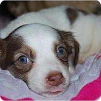 Adopt A Pet :: Ace - Oceanside, CA