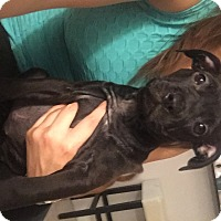 Adopt A Pet :: Piper - Miami, FL