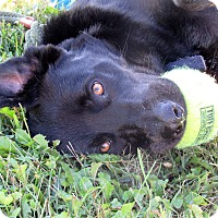 Adopt A Pet :: Hero - Grinnell, IA