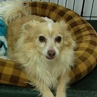 Adopt A Pet :: Buddy and Minnie - Mukwonago, WI