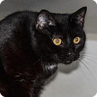 Adopt A Pet :: Bobo/ BeBe - Ottumwa, IA