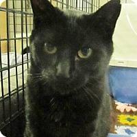 Adopt A Pet :: Buck - Lloydminster, AB
