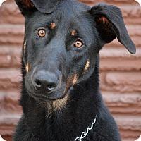 Adopt A Pet :: Ruger von Rune - Los Angeles, CA