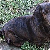 Adopt A Pet :: Kate - Conroe, TX