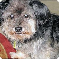 Adopt A Pet :: Trick-VA - Suffolk, VA
