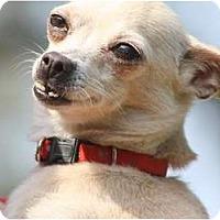 Adopt A Pet :: EMILY - Bryan, TX