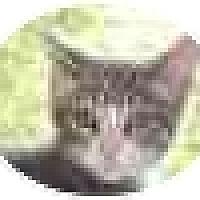Adopt A Pet :: Jackson - Jenkintown, PA