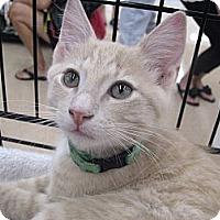Adopt A Pet :: Alan Jackson - Vero Beach, FL