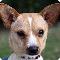 Adopt A Pet :: Pickering - San Diego, CA