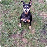 Adopt A Pet :: Hazel - Grand Rapids, MI