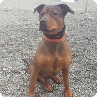 Adopt A Pet :: Siena - Yreka, CA