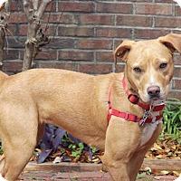 Adopt A Pet :: Gaelin - Pensacola, FL